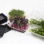 Kunststoffschalen für Gartenkräuter mit passender Faltschachtel